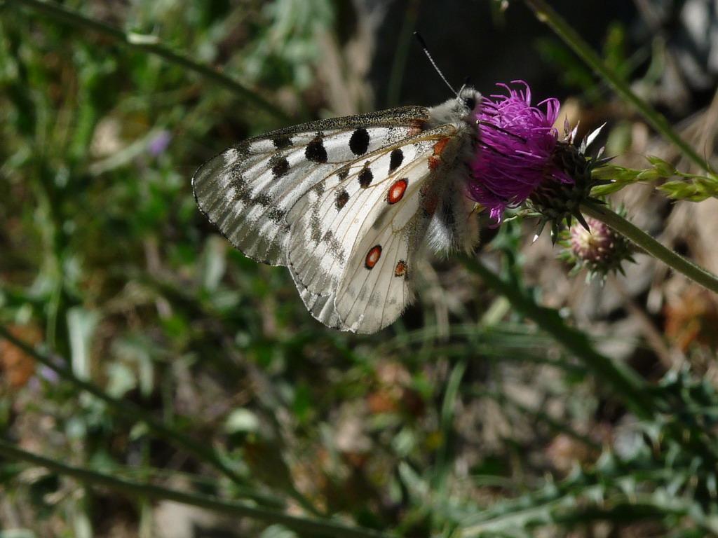 Papilion ceas no sabiendo - Alfombras que se pueden fregar ...